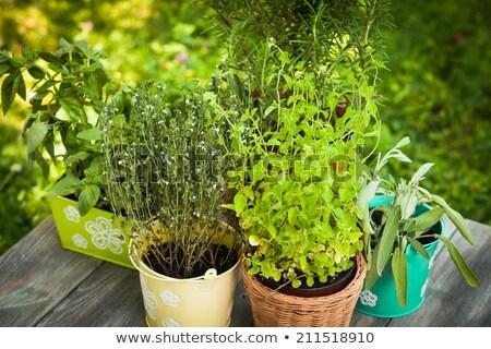 primavera · quintal · casa · grande · convés · bege - foto stock © tab62