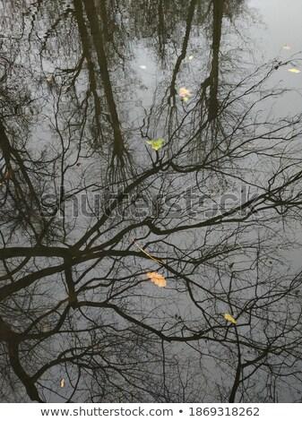 secar · macro · imagem · fino - foto stock © mikko