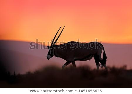 woestijn · landschap · hemel · gras · natuur · dier - stockfoto © TanArt