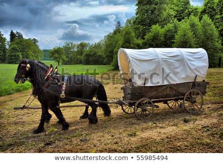 Covered Wagon in a Forest Stock photo © jkraft5