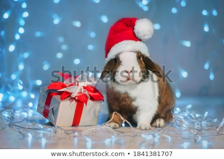 Сток-фото: мало · Кролики · три · красный · корзины · фон