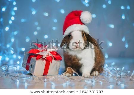 pequeño · conejos · tres · rojo · cesta · fondo - foto stock © jocicalek