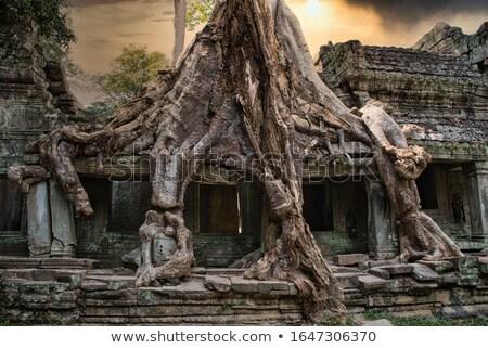 Ağaç tapınak kökleri dev büyümek taş Stok fotoğraf © searagen
