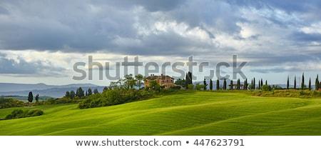 типичный тосканский пейзаж итальянский регион Тоскана Сток-фото © kubais