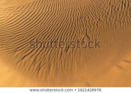 Viento playa hermosa mar fondo océano Foto stock © meinzahn