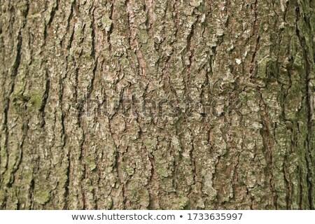 Close Up of Tree Bark Fibers Stock photo © dezign56