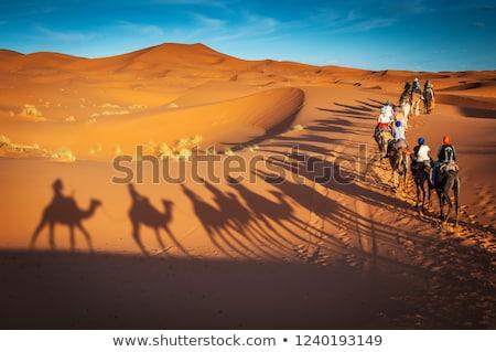 berber on camel Stock photo © tony4urban