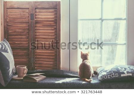 Kat houten bank bruin witte Stockfoto © mariephoto