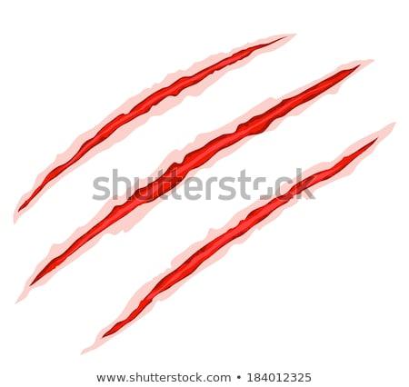 Kanlı pençe kazıyın vektör üç kırmızı Stok fotoğraf © cienpies