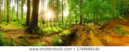 весны · ручей · небольшой · водопада · каменные · лес - Сток-фото © kotenko