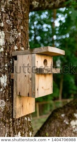 Stock foto: Kinder · Vogelkäfig · Sonnenuntergang · Illustration · Natur · Vogel