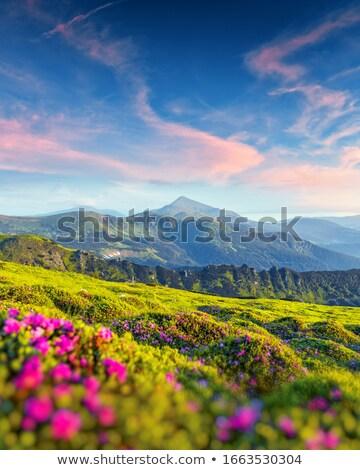 美しい · 日の出 · 山 · 花 · 夏の花 · 午前 - ストックフォト © kotenko