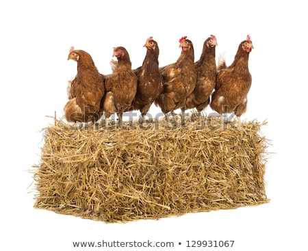 Bale-Of-Hay-Front-View Stock photo © Lightsource