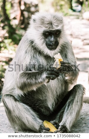Baby with banana peel on head Stock photo © julenochek