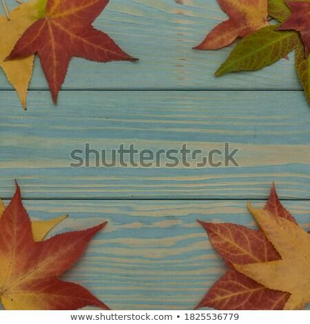 jesienią · złota · pozostawia · kopia · przestrzeń · tekst · drzewo - zdjęcia stock © limbi007