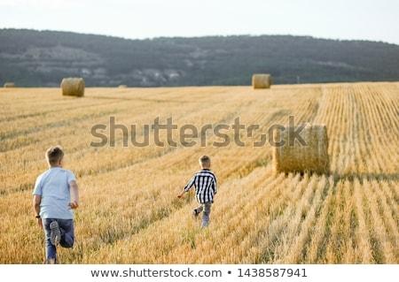два мальчики сено ребенка фермы портрет Сток-фото © IS2