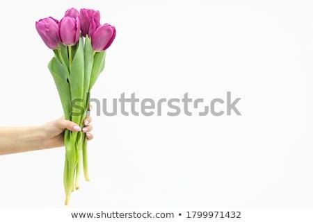 Violet tulp bladeren kleur geschenk boeket Stockfoto © martin33