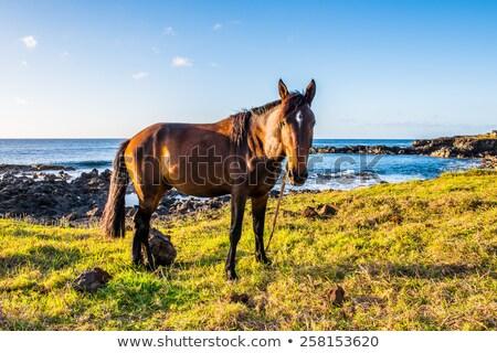Atlar Paskalya Adası okyanus Şili çim Stok fotoğraf © daboost