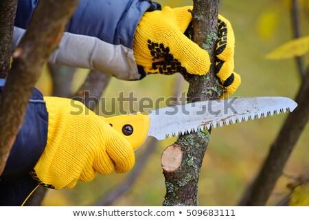 pruning saw stock photo © serg64