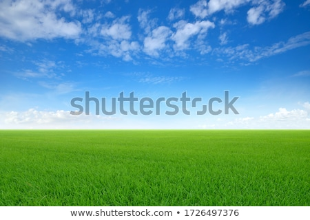 Sky and Grass Stock photo © keeweeboy