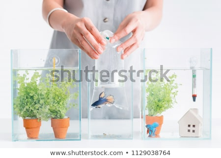 Woman holding fishbowl in new home Stock photo © IS2