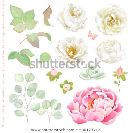 decoratief · cosmetica · parfum · geïsoleerd · mode · groep - stockfoto © purplebird
