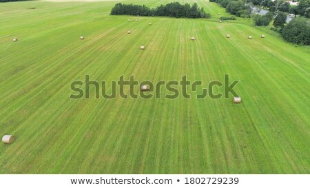 Aerial view from drone large stacks of dry hay bales in the field. Tractor folds bales of hay on a s Stock photo © artjazz