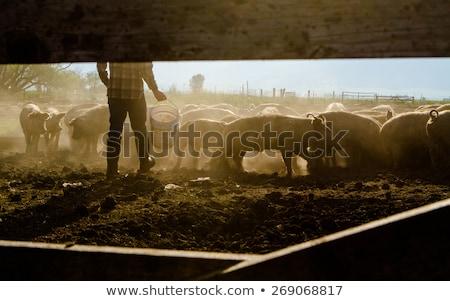 çiftçi · veteriner · mandıra · sığırlar · kadın · gıda - stok fotoğraf © monkey_business