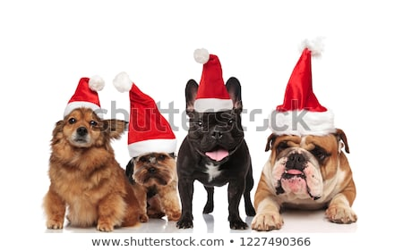 group of four adorable santa dogs of different breeds Stock photo © feedough