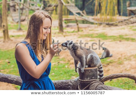Young woman is fed Ring-tailed lemur - Lemur catta. Beauty in nature. Petting zoo concept Stock photo © galitskaya
