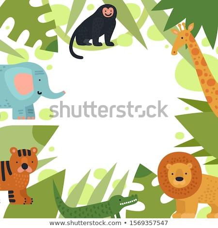 Frontera plantilla monos selva ilustración forestales Foto stock © colematt