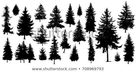 Ingesteld pijnboom illustratie kunst groene winter Stockfoto © colematt