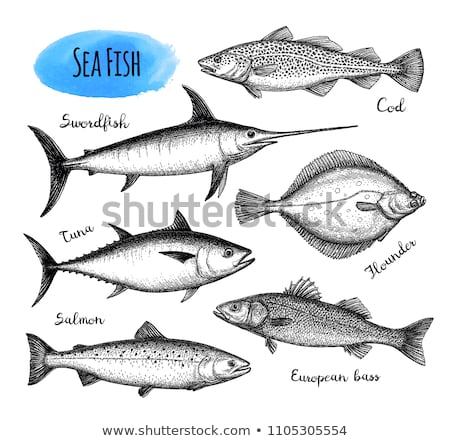 Zwaardvis schets stijl voedsel hand Stockfoto © Arkadivna