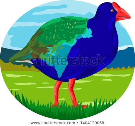 south island takahe bird oval retro stock photo © patrimonio
