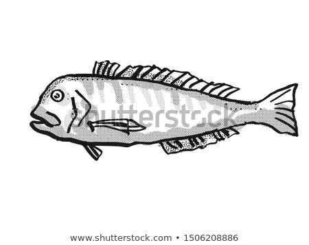 Australian Barred Tilefish Fish Cartoon Retro Drawing Stock photo © patrimonio