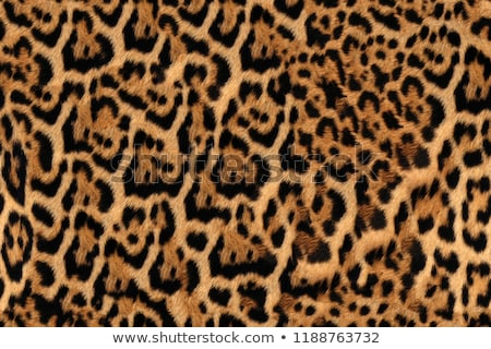 Seamless leopard fur pattern. Fashionable wild leopard print background. Modern panther animal fabri Stock photo © ESSL