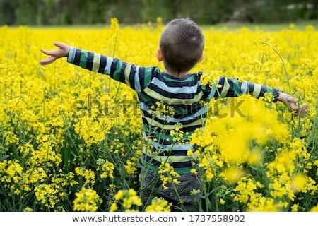 Oilseed rape field Stock photo © rafalstachura
