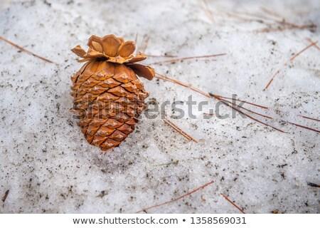 Stok fotoğraf: Kirli · çam · ağacı · havlama · çatlaklar · arka · plan · doğal