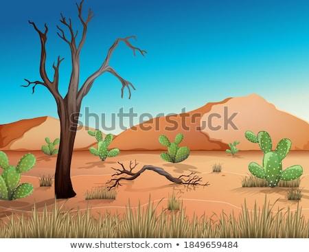 Arid landscape Stock photo © jrstock