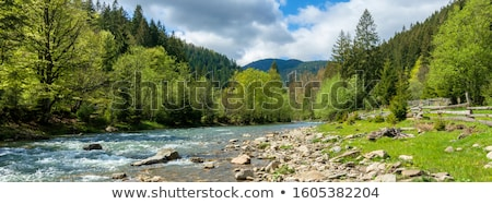 River in forest on a sunny day Stock photo © azjoma