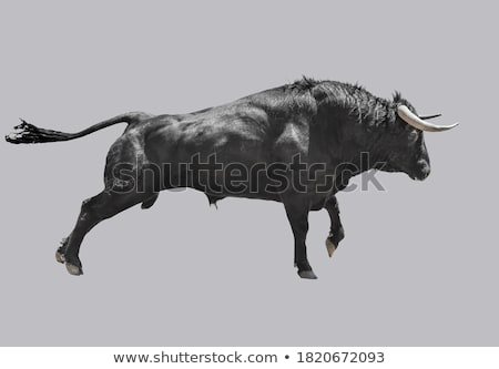 Bull · animaux · fort · corne · illustration - photo stock © carbouval