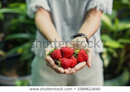çilek beyaz arka plan kırmızı bitki ürün Stok fotoğraf © mizar_21984
