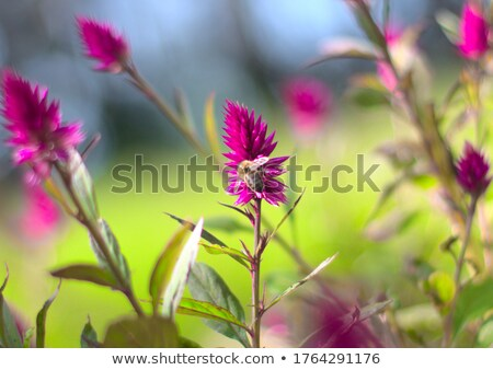 A bee collecting nectar.  Stock photo © EFischen