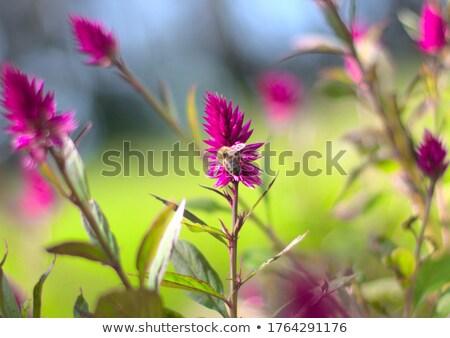Abeille nectar séance coloré fleur Photo stock © EFischen
