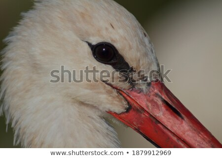 Stork with its Prey Stock photo © manfredxy