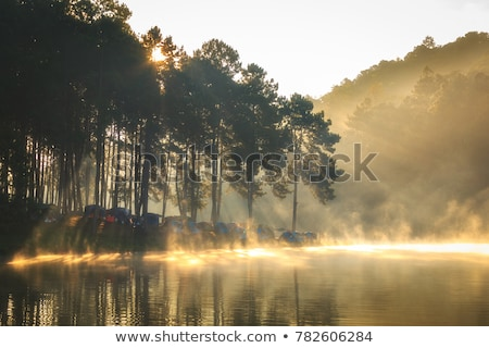 Morning sun through fog at lake Stock photo © Juhku