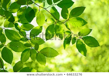 Tree branch over blurred green leaves background Stock photo © teerawit