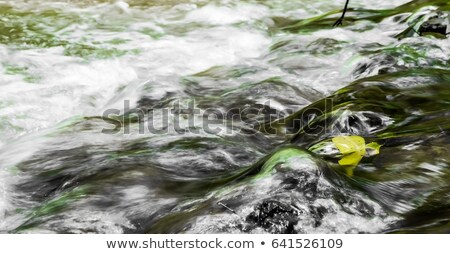 Fighting Against the Stream Stock photo © make