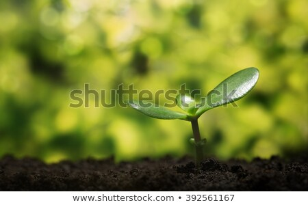 blad · logo · groeiend · boom · ontwerp · groene - stockfoto © acong_kecil