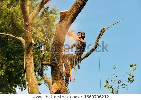 Arborist Stock photo © Lightsource